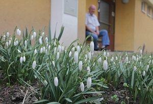 Rozkvetlé kytičky v Českých Budějovicích