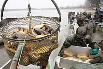 Třeboňstí rybáři při výlovu rybníka Koclířov u Lomnice nad Lužnicí.