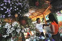 Rostliny, nářadí a zařízení pro zahradu, dům a nejrůznější koníčky nabídne výstava Hobby 2009 od středy do neděle.