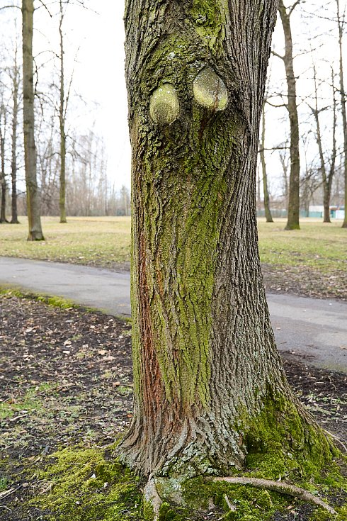 Duch stromový 8 - pidlooký
