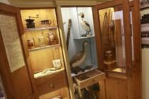Expozice o historii Protivína, kterou loni v srpnu otevřelo Prácheňské muzeum, získala cenu Gloria musaealis. Na snímku skříň Václava Špatného.