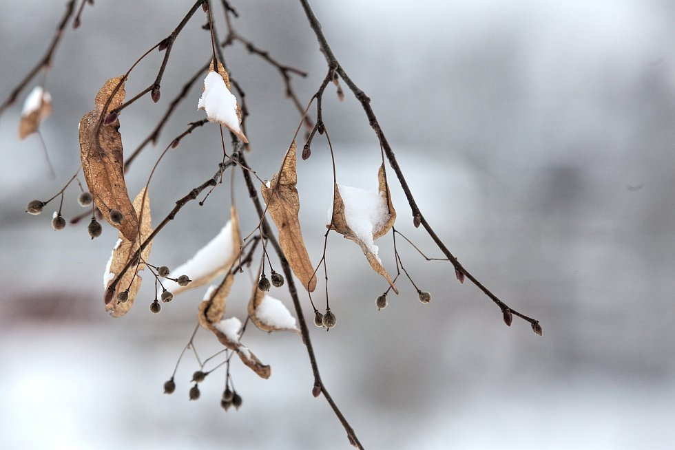 V pondělí ráno vítal nový začátek nového pracovního týdne v Budějovicích sníh.