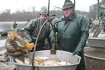 Hlubočtí rybáři v rámci jarních výlovů mají v plánu vylovit asi sto tun tržní ryby, převážně kaprů. Snímky jsou z výlovu rybníka Naděj u Hluboké nad Vltavou, kde chtějí slovit třicet tun ryb.