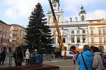 Jedle korejská vánoční strom Českých Budějovic.