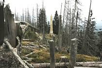 Pohled k pomníku Adalberta Stiftera od hory Plechý přes torza stromů, které podlehly kůrovci.