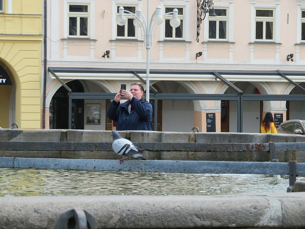 Problém s holuby v Českých Budějovicích by mohl vyřešit holubník. Podívejte se, kolik jich je na náměstí Přemysla Otakara II.