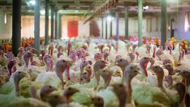Ve filmu jsou zastoupena nejčastěji zneužívaná zvířata u nás: krávy, prasata, ovce, kozy, slepice, kachny, krůty, křepelky a ryby.