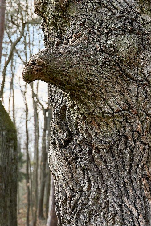 Duch stromový 24 - orel