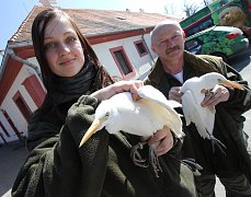 Stěhování vodního ptactva v zoo