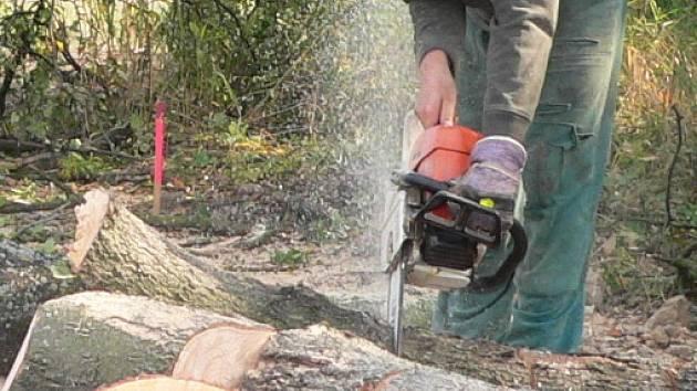 Téměř šedesát stromů v největším českobudějovickém parku čeká kácení kvůli zdravotnímu stavu.