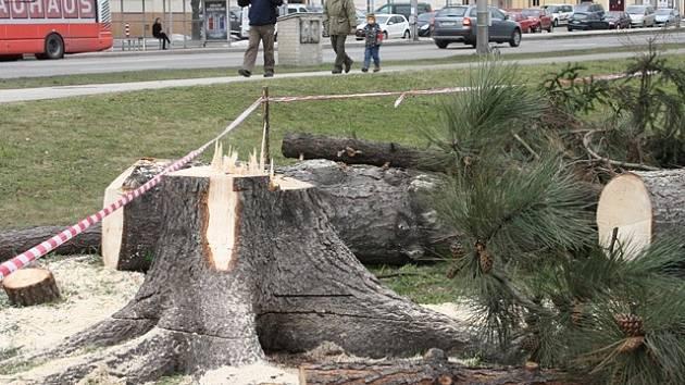 Pokácené stromy u českobudějovického výstaviště.