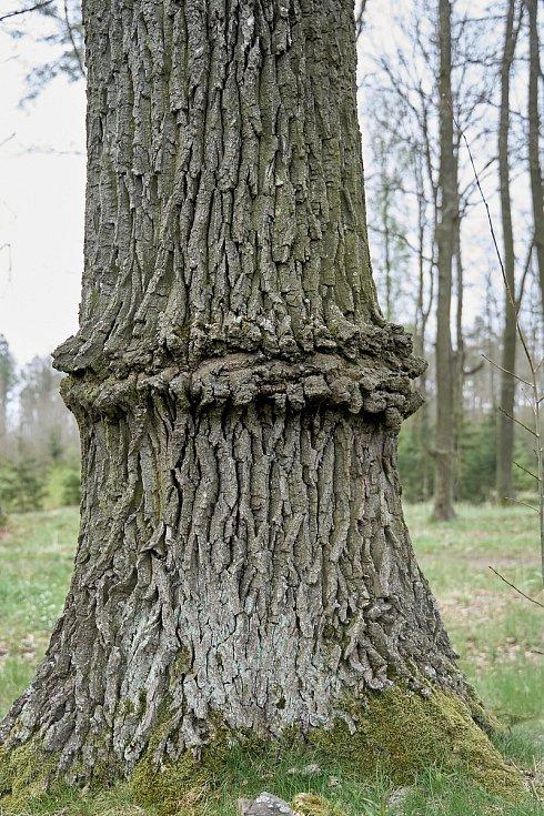 Duch stromový 31 - věneček
