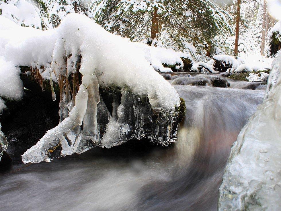 Snímek vznikl u Losenice na Šumavě, kde byla ve čtvrtek výška sněhu více než 20 centimetrů. Minimální teploty na jihočeských horách stále klesaly hluboko pod nulu.