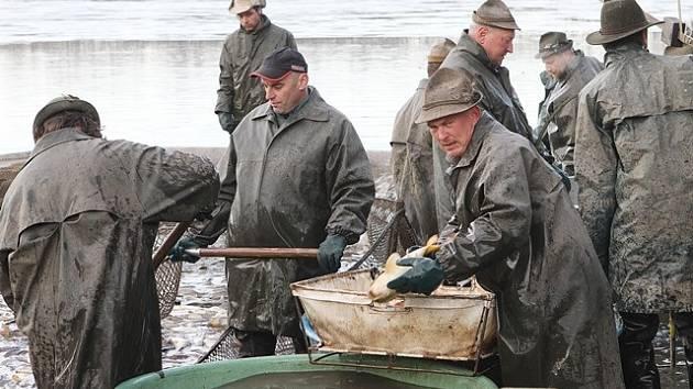 Rybáři v první jarní den lovili rybník Vrbenský nový u Českých Budějovic, který slouží převážně jako komorový, tedy k zimování ryb před vysazením do hlavních rybníků.
