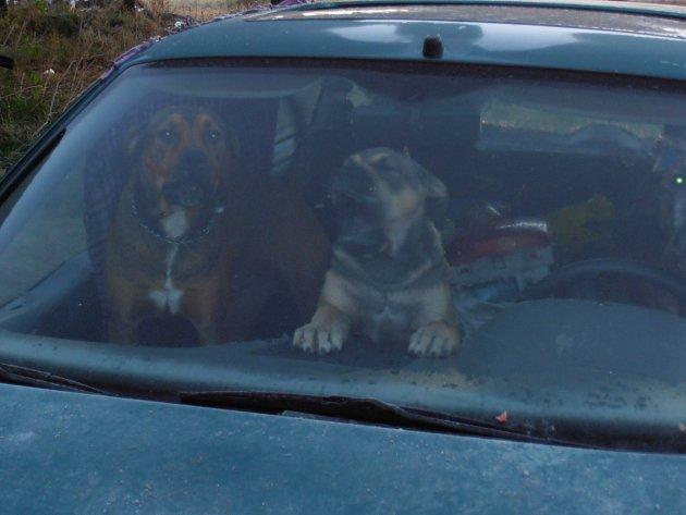 Dvojice z Českých Velenic chovala v autě bojové psy. Jeden z nich napadl školačku a policistu.