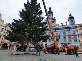Vánoční stromek na českobudějovické náměstí Přemysla Otakara II. doputoval ze Zavadilky.