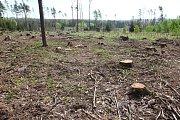 Zrzavý les, mrtvý les. Známka řádění kůrovce. Dřevo napadené lýkožroutem je nutné co nejrychleji zpracovat a odvézt z lokality.