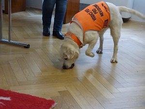 Nesahejte na vodicího psa, prosí nevidomá