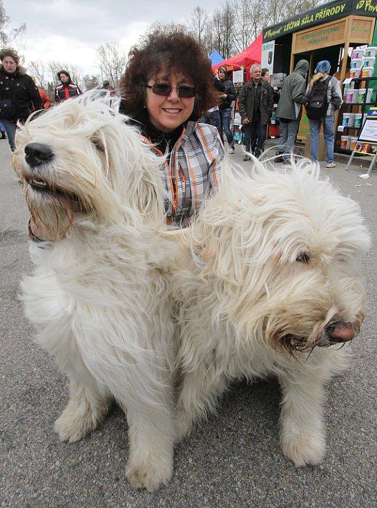 Výstava psů v Českých Budějovicích