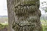 Duch stromový 28 - dvouhubý
