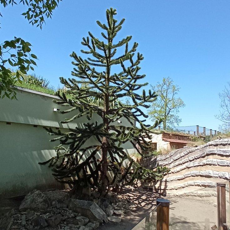 Po letech navštívila Monika Šavlová, která na jih přijela až z Kladrub u Stříbra, hlubockou zoo.
