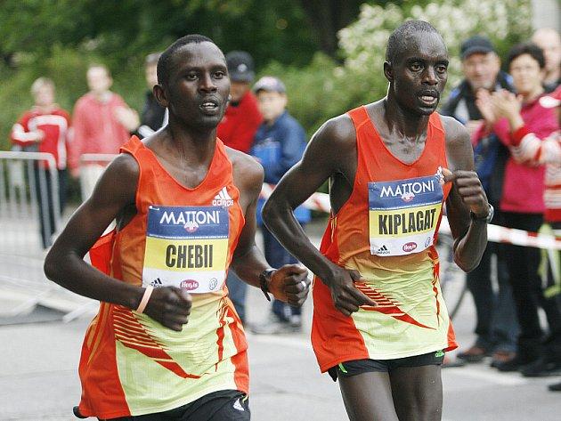 Půlmaraton v Českých Budějovicích
