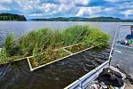 Na lipenských experimentálních plovoucích ostrovech vědců z českobudějovického Biologického centra AV ČR zahnízdil silně ohrožený rybák obecný.