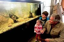 Velká akvária, staré pruty a navijáky nebo kreslený humor představila v sobotu akce v hlubockém zámku Ohrada, kde sídlí pobočka Národního zemědělského muzea.