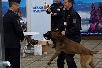 Policista Ondřej Skok a jeho 3,5letý belgický ovčák Attu vyhráli republikové mistrovství ve služební kynologii.