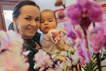 Výstava orchidejí se uskuteční v Jihočeském muzeu v Českých Budějovicích.