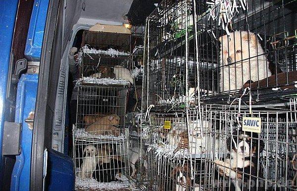 Zase pašovaná zvířata…