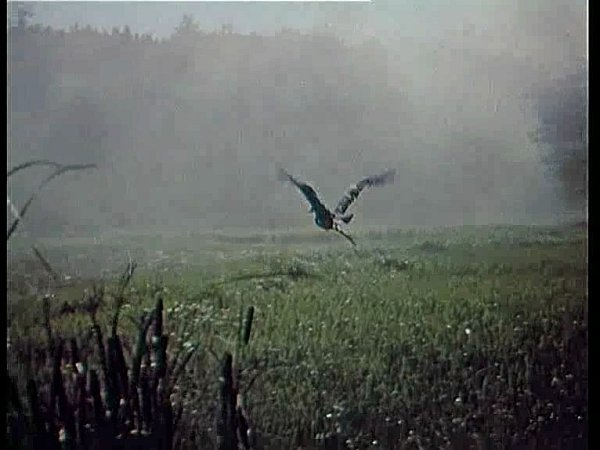 Na snímku letí jedna zvolavek, které pro potřeby filmu nachytal rybářský tesař Janoušek.