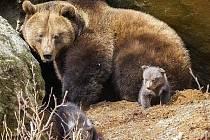 Tragédie u medvědů v parku.