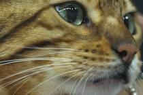 """Popis fotky: Kočka - Kočka - ilustrační foto.<body xmlns=""""http://newsml.ctk.cz/ns/ctkxhtml.xsd""""><p>    Paříž - Sterilizované kočky žijí déle a lépe, zjistila francouzská studie, z níž cituje list Le Figaro. Kromě nekontrolovaného množení totiž sterilizace"""