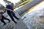 Hasiči trénují u Malého jezu v Českých Budějovicích záchranu člověka z vody.