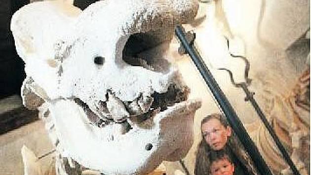 Kosterní velikáni. Návštěvníci protivínské Kaplanky si prohlížejí obří kostry nosorožců.