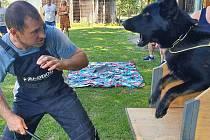 Dozvěděli se více o výcviku psů.