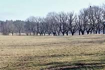 Novohradsko je letos bez sněhu.