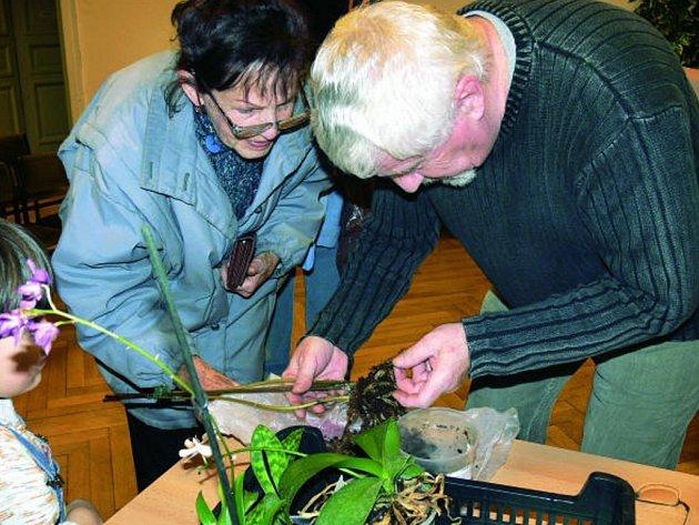 Lidé, kteří propadli kouzlu orchidejí, se za odborníky chodili jednak pochlubit s pěstitelskými úspěchy, ale také poradit se, co s neduživými rostlinkami.