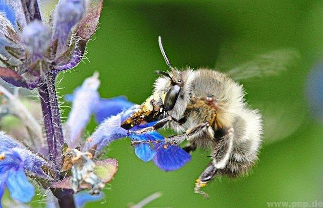 Nová včelka od sousedů.