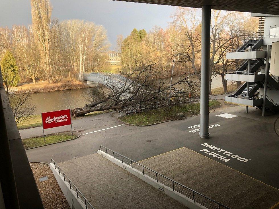 U Budvar arény silný vítr vyvrátil strom.
