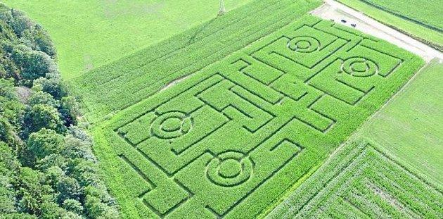 Kukuřičný labyrint zdronu.