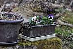 Jaro přínáší i v době covidové naději.