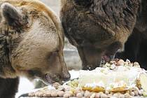 Medvědi v Zoo Ohrada.