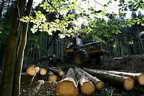 Ve II. zóně národního parku Šumava u Schwarzenberského kanálu poblíž Jeleních vrchů pokračovaly v pondělí těžké stroje harvestory v těžbě stromů, které napadl kůrovec.