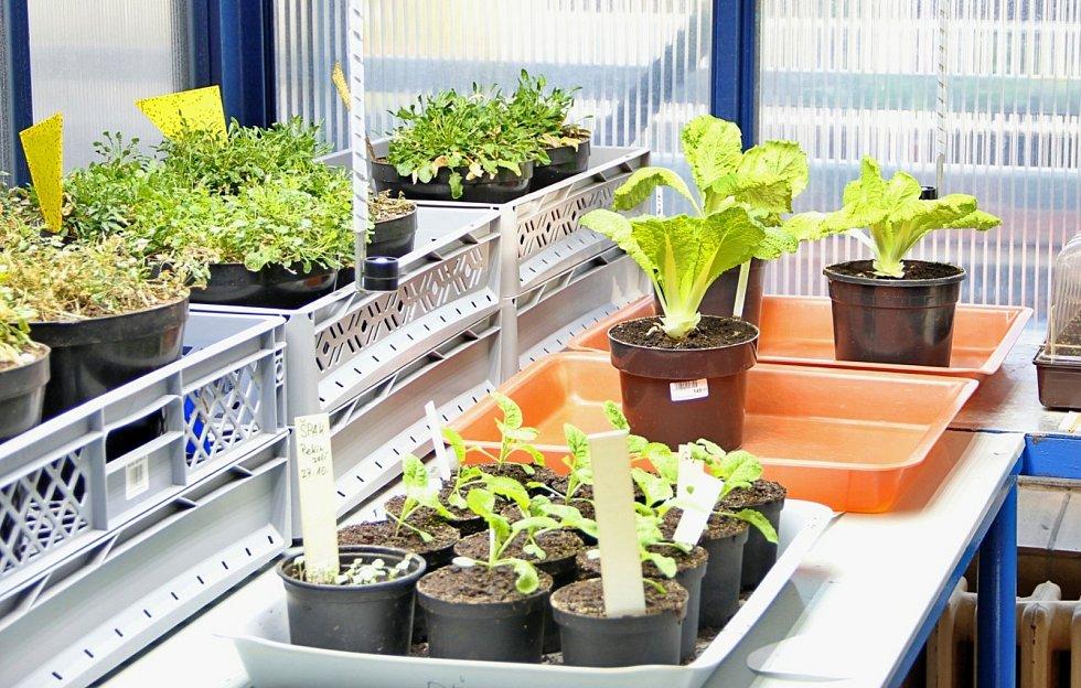 Nový výzkum zahajuje Biologické centrum Akademie věd ČR. Bude se týkat kovů v rostlinách.