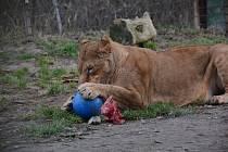 Štědrý den v Zoo Dvorec.
