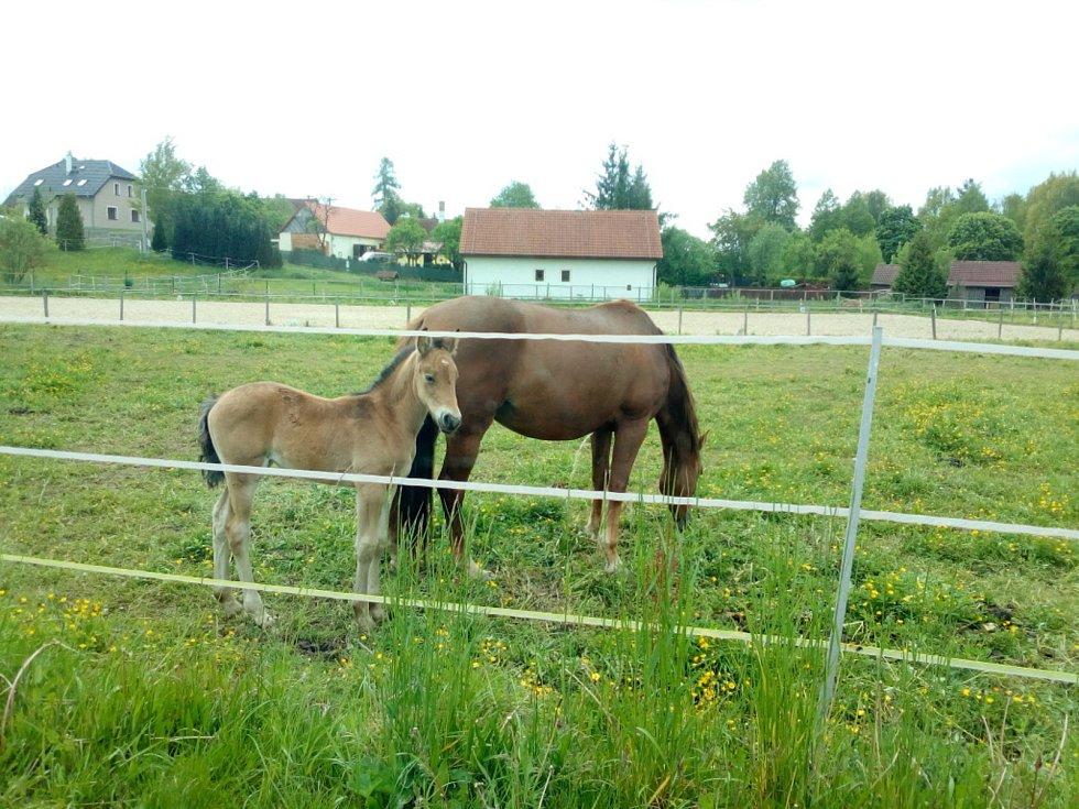 S jarem se na pastvinách i u rybníků na Českobudějovicku tradičně objevila mláďata. Například hříbata v Jílovicích u malého jezdeckého areálu.