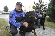 Na snímku je vpředu psovod Václav Bušek s Clifem.