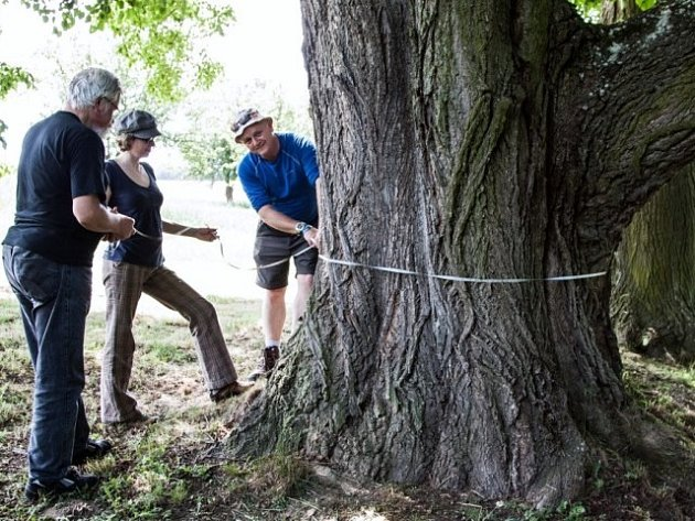 Přihlášený strom musí být dobře popsán, včetně pozice udané GPS navigací, předpokládaného stáří a obvodu kmene.
